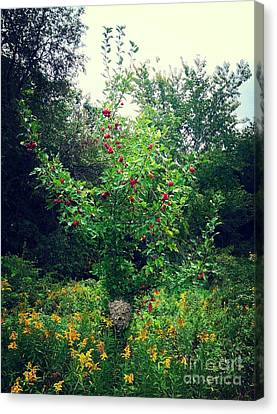 Apples And Hornets Canvas Print
