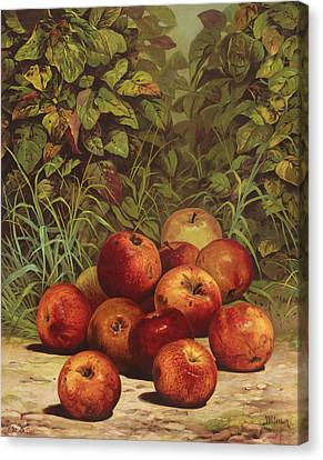 Apples Circa 1868 Canvas Print by Aged Pixel