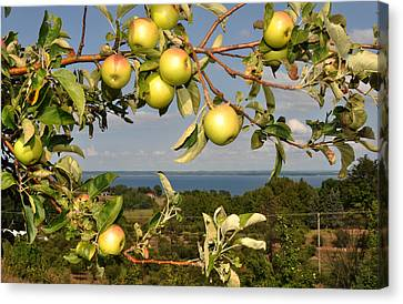 Apples Over Grand Traverse Bay Canvas Print by Diane Lent