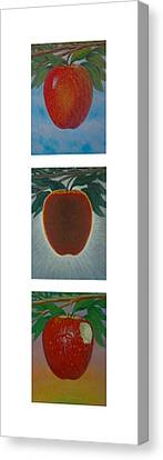 Apples Triptych 2 Canvas Print