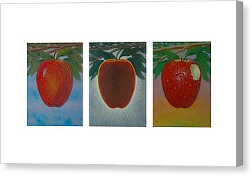 Apples Triptych Canvas Print by Don Young