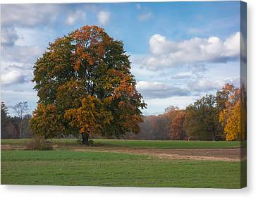 Appleton Tree Canvas Print by David Stone