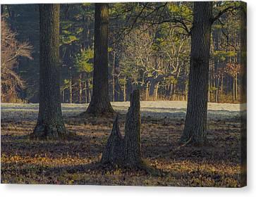 Appleton Trees Canvas Print by David Stone