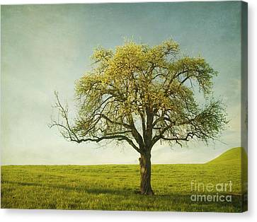 Appletree Canvas Print by Priska Wettstein