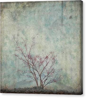 Approaching Spring Canvas Print by Carol Leigh