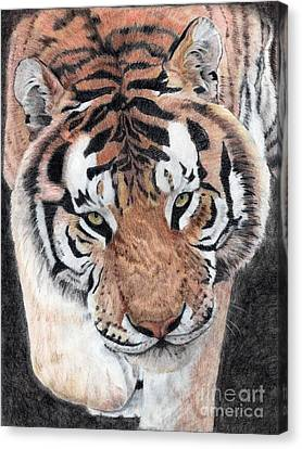 Approaching Tiger Canvas Print by Audrey Van Tassell