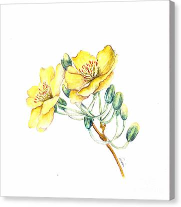 Apricot Blossom Canvas Print by Dion Dior