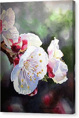 Apricot Flowers Canvas Print