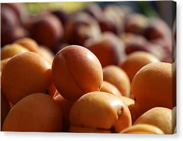 Apricots Canvas Print by Terry Horstman