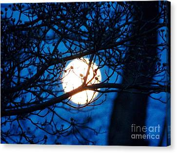 April Morning Moon Canvas Print by Judy Via-Wolff