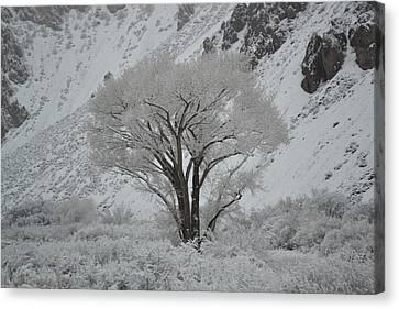 April Snow In Utah - Tree Canvas Print
