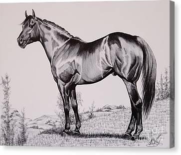 Aqha Stallion Driftwood Canvas Print