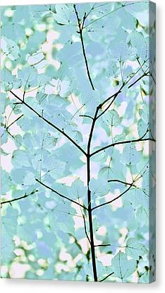 Aqua Blues Greens Leaves Melody Canvas Print by Jennie Marie Schell