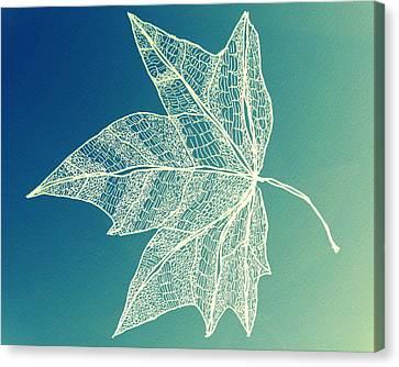 Aqua Leaf Study 1 Canvas Print by Cathy Jacobs