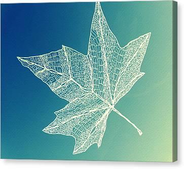 Aqua Leaf Study 4 Canvas Print by Cathy Jacobs