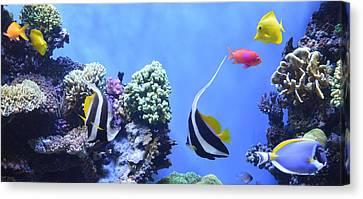Aquarium 5 Canvas Print by Barbara Snyder