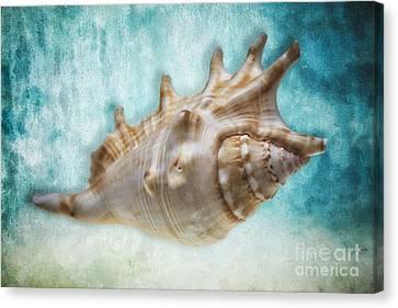 Aquatic Dreams I Canvas Print by George Oze