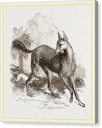 Greyhound Canvas Print - Arabian Greyhound by Litz Collection