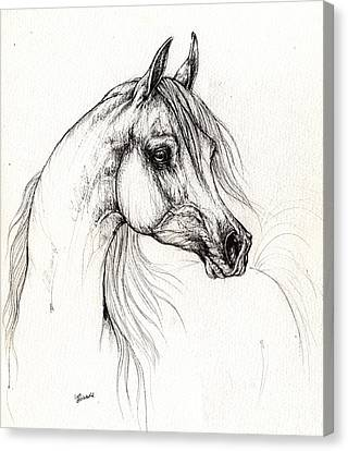 Arabian Horse Drawing 10 09 2013 Canvas Print
