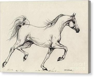 Arabian Horse Drawing 31 Canvas Print by Angel  Tarantella