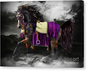 Arabian Horse  Shaitan Canvas Print by Shanina Conway