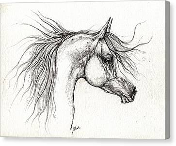 Arabian Horsedrawing 28 08 2013 Canvas Print by Angel  Tarantella