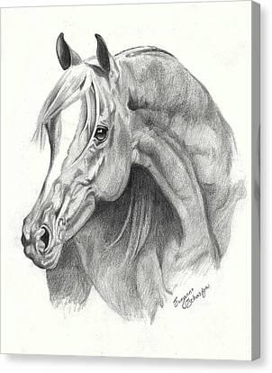 Arabian Stallion Canvas Print by Suzanne Schaefer