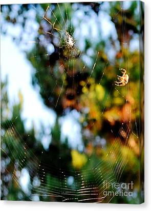 Arachnid Art Canvas Print