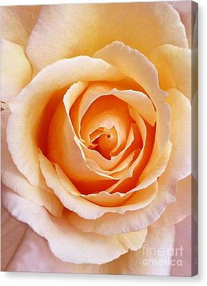 Aranciata Rose Blossom Canvas Print
