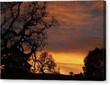 Canvas Print featuring the photograph Arastradero Open Space Preserve Sunset by Priya Ghose