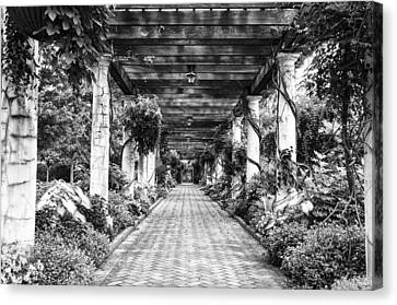 Arbor Walkway Canvas Print by Phyllis Peterson