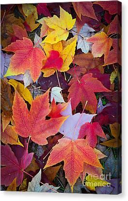 Arboretum Leaves Canvas Print by Inge Johnsson