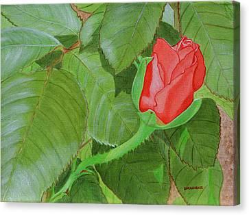 Arboretum Rose Canvas Print by Donna  Manaraze