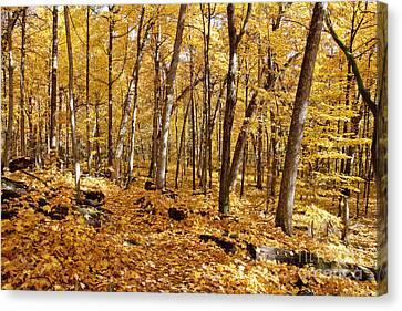 Arboretum Trail Canvas Print by Steven Ralser