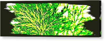 Arbres Verts Canvas Print by Will Borden