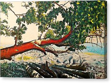 Arbutus Over Beach Canvas Print by Stanley  Funk