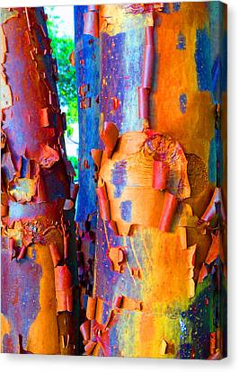 Arbutus Tree Summer Canvas Print by Laurie Tsemak