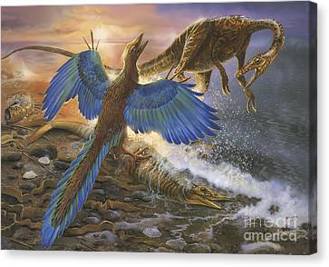 Archaeopteryx Defending Its Prey Canvas Print by Jan Sovak