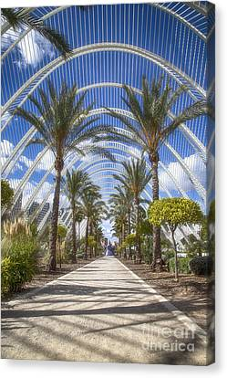 Arche With Palmtrees Canvas Print