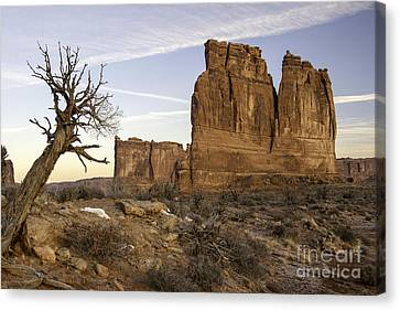 The Organ And The Tower Of Babel Canvas Print by Tim Moore