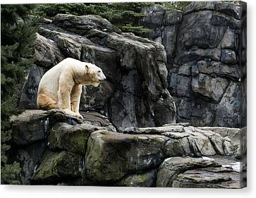 Arctic Bear Canvas Print