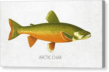 Angling Canvas Print - Arctic Char by Aged Pixel