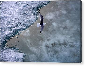 Arctic Flight Canvas Print