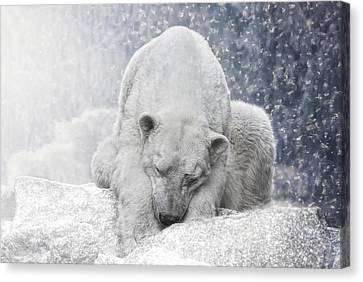Arctic Giant Sleeping Canvas Print by Joachim G Pinkawa