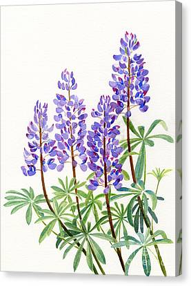 Arctic Lupine 2 Canvas Print by Sharon Freeman