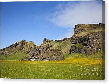 Arctic Meadow Canvas Print
