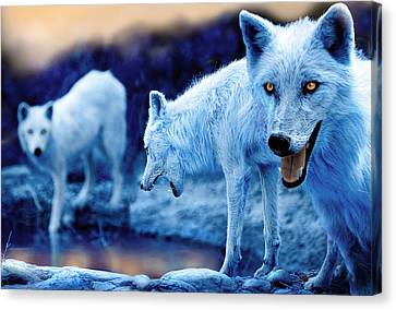 Arctic White Wolves Canvas Print by Mal Bray