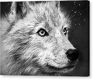 Arctic Wolf Canvas Print by Sharlena Wood