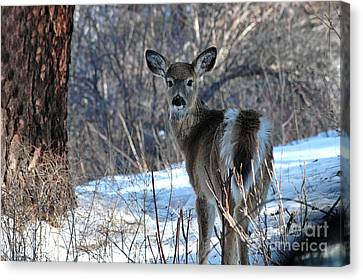 Canvas Print featuring the photograph Are You Looking At Me by Sam Rosen