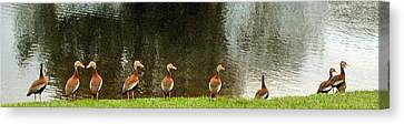 Are You Sure They Look Like Us? Canvas Print by Jim Hubbard